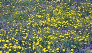 草原に初夏の風