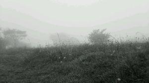 マツムシソウの高原